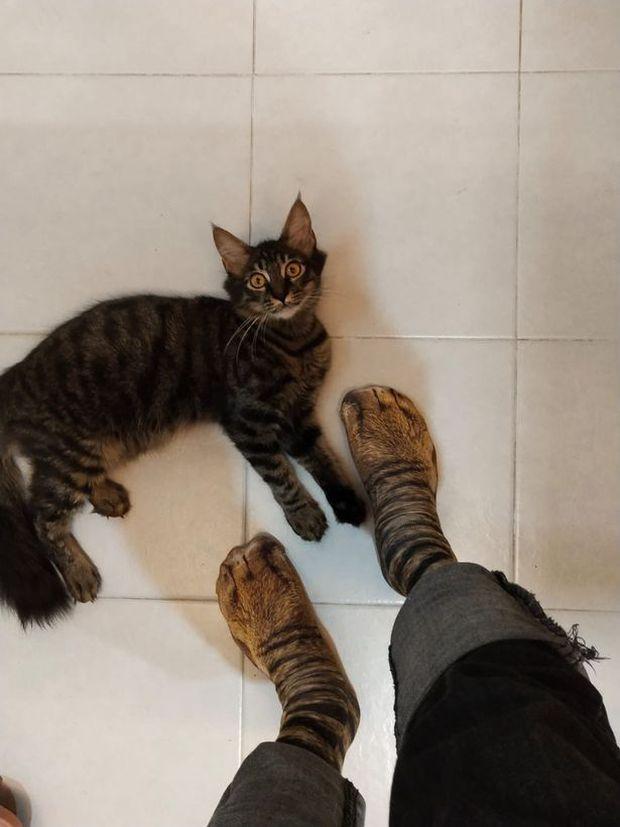 Biểu cảm ngỡ ngàng của chú mèo thu hút 400 nghìn lượt like, mọi thứ bắt nguồn từ đôi chân của chủ nhân và căn bệnh nghiện mua sắm online - Ảnh 1.