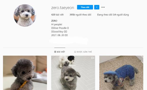 Cún bạc tỷ gọi tên Zero nhà Taeyeon (SNSD): Cực hot trên MXH, kiếm tiền tỷ nhờ brand riêng, gặp cả tình tin đồn của chủ nhân - Ảnh 7.