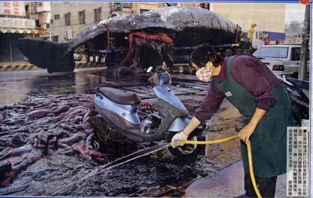 Clip: Xác cá voi trôi lênh đênh ngoài biển rồi bất ngờ phát nổ, tim gan lòng mề lộ hết ra khiến ngư dân phát khiếp - Ảnh 3.