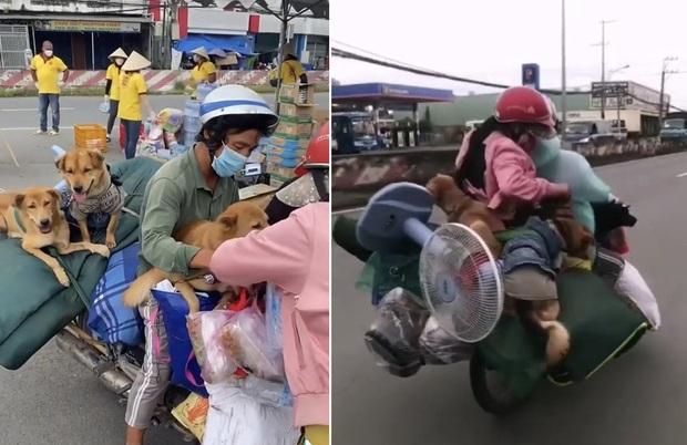 Chính quyền xã lên tiếng về vụ 15 con chó bị tiêu hủy: Người dân đã đồng ý, dựa trên tinh thần tự nguyện - Ảnh 1.