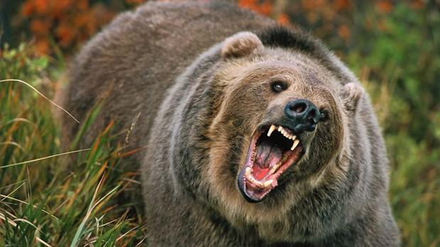 Bị gấu dí đuổi suýt bỏ mạng, người phụ nữ may mắn về được rồi ăn ngay án tù: Chuyện gì kỳ lạ thế? - Ảnh 2.