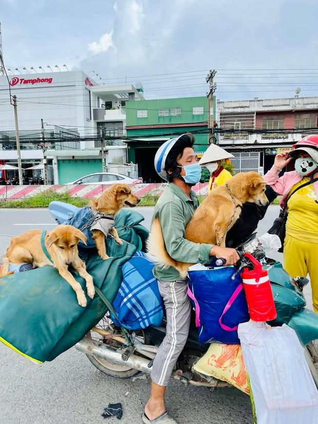 Vụ đàn chó 15 con bị tiêu huỷ: 1 chú cún may mắn sống sót, người chủ mới khẳng định sẽ tặng lại vì nó là 1 phần kỷ niệm của cô chú - Ảnh 3.