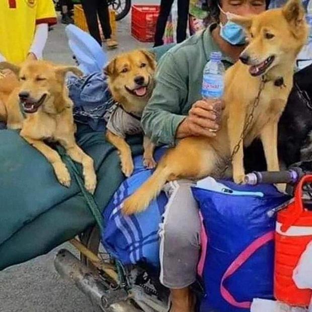 Nữ trưởng trạm y tế xã ở Cà Mau xin thôi việc vì áp lực sau khi xảy ra vụ tiêu hủy đàn chó mèo của người dân - Ảnh 1.