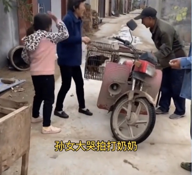 Video cô bé khóc lóc vật vã, ngăn không cho bà ngoại bán chó cưng nuôi 2 năm gây tranh cãi trên MXH - Ảnh 3.