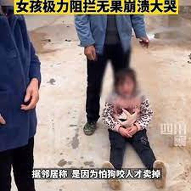 Video cô bé khóc lóc vật vã, ngăn không cho bà ngoại bán chó cưng nuôi 2 năm gây tranh cãi trên MXH - Ảnh 4.