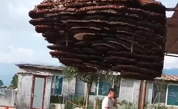Phát hiện tổ ong 10 tầng to như cái nhà, dân làng thuê cần cẩu gỡ xuống để đem đi đăng ký kỷ lục Guinness - Ảnh 4.