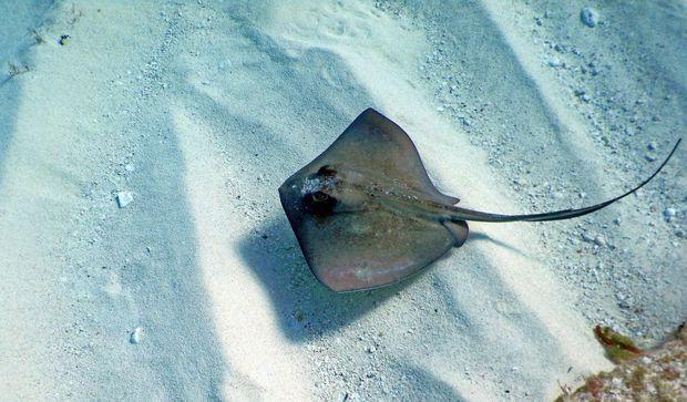 Clip: Cầm cá đuối chụp ảnh, thanh niên đổ gục sau khi nhận cú chích đau khủng khiếp và nguy hiểm nhất thế giới - Ảnh 8.