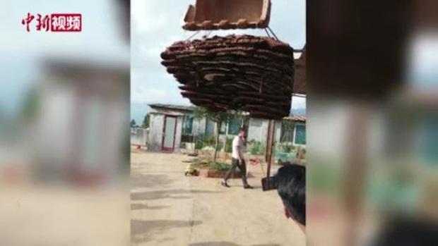 Phát hiện tổ ong 10 tầng to như cái nhà, dân làng thuê cần cẩu gỡ xuống để đem đi đăng ký kỷ lục Guinness - Ảnh 5.