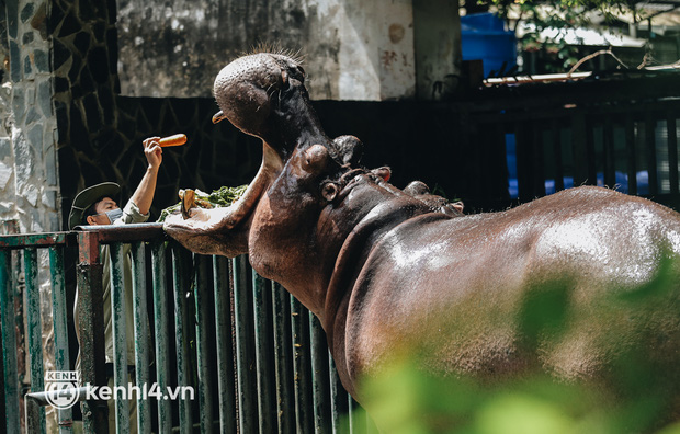 Thảo Cầm Viên Sài Gòn được AEON Việt Nam hỗ trợ thực phẩm cho bầy thú: 2 đợt/tuần, mỗi đợt khoảng 200kg - Ảnh 1.