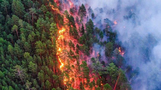 Vì sao cháy rừng ngày càng cuồng bạo? Là vì một quả bom nổ chậm nhân loại vô tình tạo ra sau hàng thập kỷ chống lại giặc lửa - Ảnh 4.