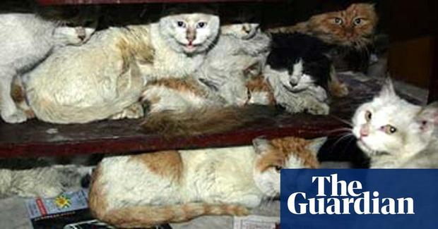 Chính quyền một địa phương ở Trung Quốc bị chỉ trích vì giết ba con mèo mắc COVID-19 - Ảnh 1.