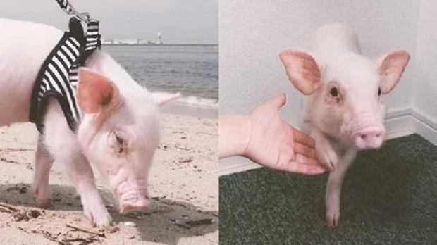 Mở tài khoản cho thú cưng trắng trẻo, xinh xắn, YouTuber khiến hàng triệu người sốc tận óc khi đăng bức ảnh sau 100 ngày chăm bẵm - Ảnh 1.