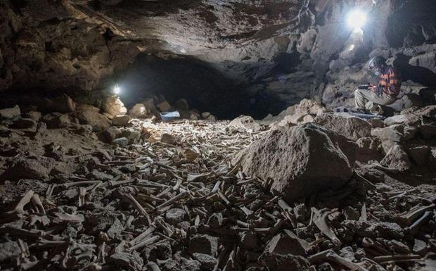 Phát hiện sọ người trong hang động núi lửa, hé lộ tính phàm ăn của loài linh cẩu - Ảnh 1.