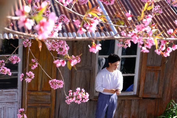 Ảnh: Đà Lạt những ngày cuối năm đẹp mê mẩn trong sắc hồng của mai anh đào nở muộn - Ảnh 4.