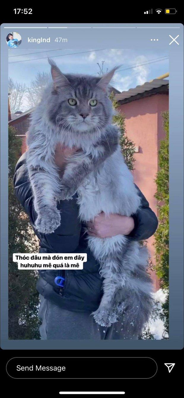 Mua nhanh bán gọn như Linh Ngọc Đàm, thích là chuyển khoản ngay 100 triệu để sở hữu chú mèo hiếm - Ảnh 2.
