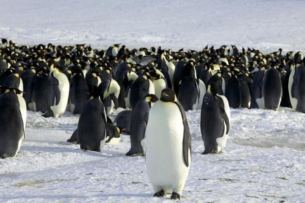 Thảm họa từ tảng băng trôi lớn nhất thế giới - Ảnh 6.
