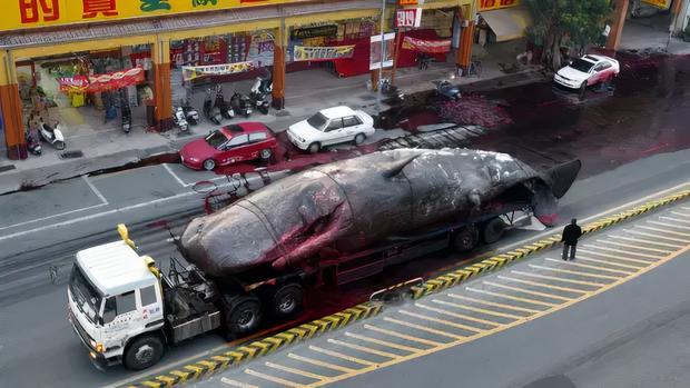 Đây là thảm họa có thể xảy ra nếu bạn lại gần một xác cá voi dạt bờ và câu chuyện về quả bom khổng lồ kỳ lạ nhất lịch sử - Ảnh 3.
