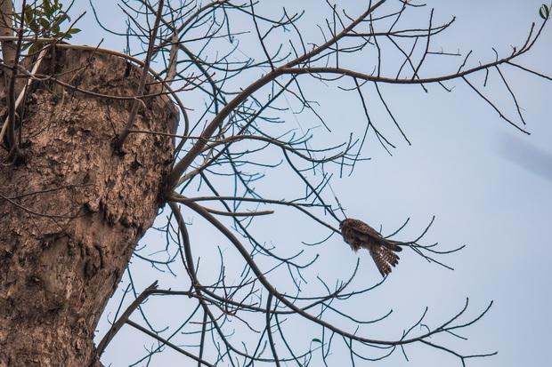 Những điều kì diệu nhỏ bé lấp lánh: Cư dân, công ty cây xanh ở Ecopark huy động xe cẩu chạy 10km để giải cứu chú chim mắc trên cành cây - Ảnh 1.