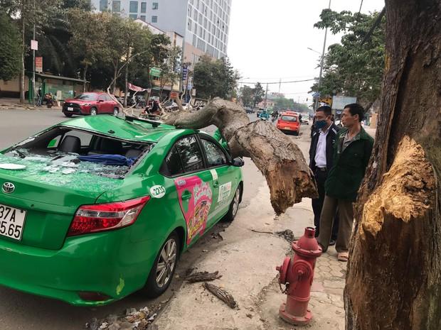 Nghệ An: Cây bất ngờ đổ bẹp xe, nam tài xế và khách thoát chết - Ảnh 2.