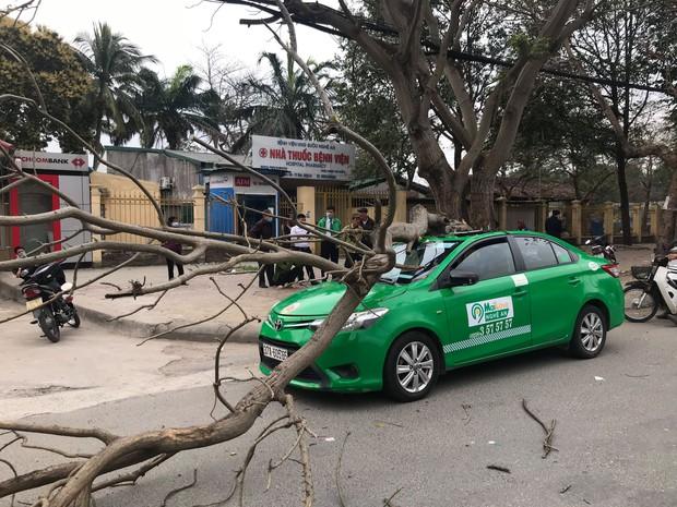 Nghệ An: Cây bất ngờ đổ bẹp xe, nam tài xế và khách thoát chết - Ảnh 1.