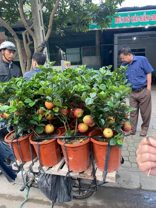 """Gia đình bỏ hơn 1 triệu mua cây táo chơi Tết, 3 ngày sau cây nở ra… hoa dâm bụt khiến khách vừa """"khen đểu"""" vừa cười tắc thở - Ảnh 2."""