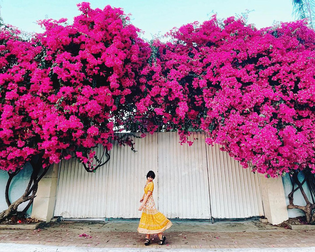"""Paper flower truss """"extreme"""" is causing a storm in Vung Tau because its blooming is so beautiful, people are racing to ask for addresses to check-in - Photo 7."""