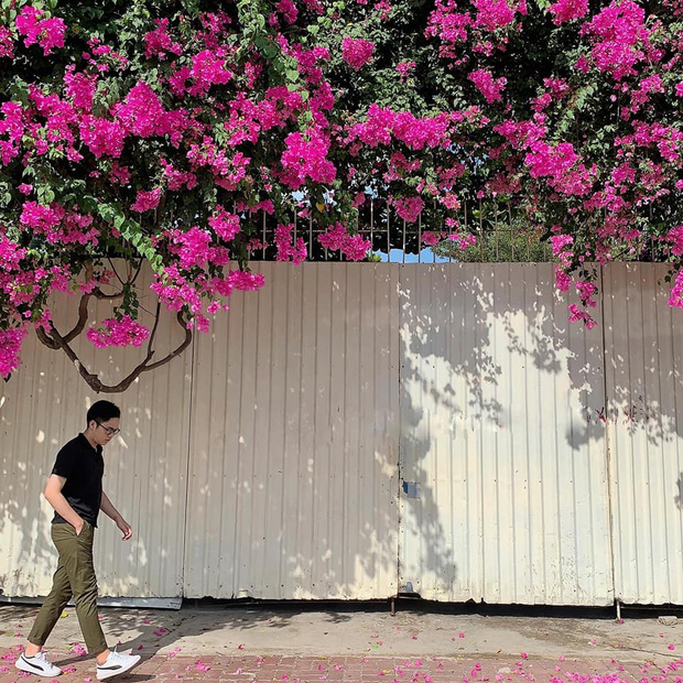 """Paper flower truss """"extreme"""" is causing a storm in Vung Tau because its blooming is so beautiful, people are racing to ask for addresses to check-in - Photo 6."""
