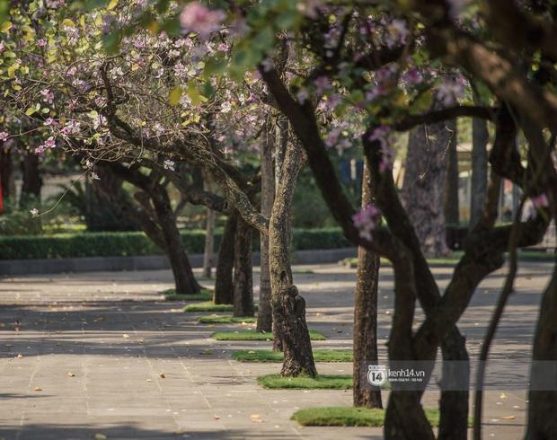 Hà Nội đẹp mê mẩn trong sắc tím hoa ban rợp trời, dân tình rần rần rủ nhau về con đường nổi tiếng chụp ảnh - Ảnh 10.