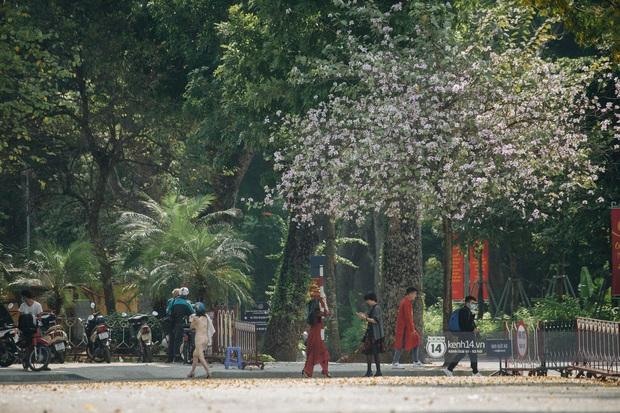 Hà Nội đẹp mê mẩn trong sắc tím hoa ban rợp trời, dân tình rần rần rủ nhau về con đường nổi tiếng chụp ảnh - Ảnh 11.