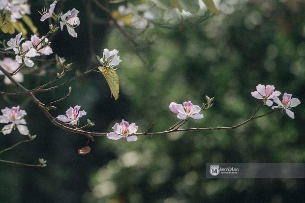 Hà Nội đẹp mê mẩn trong sắc tím hoa ban rợp trời, dân tình rần rần rủ nhau về con đường nổi tiếng chụp ảnh - Ảnh 12.