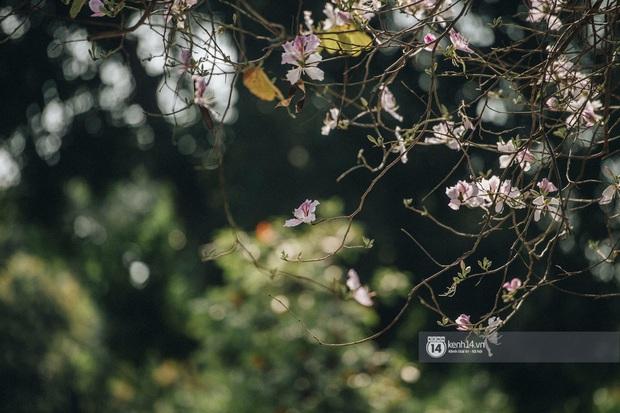 Hà Nội đẹp mê mẩn trong sắc tím hoa ban rợp trời, dân tình rần rần rủ nhau về con đường nổi tiếng chụp ảnh - Ảnh 14.