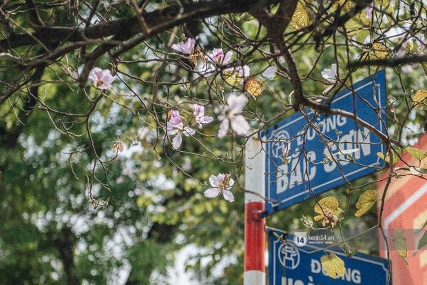 Hà Nội đẹp mê mẩn trong sắc tím hoa ban rợp trời, dân tình rần rần rủ nhau về con đường nổi tiếng chụp ảnh - Ảnh 1.
