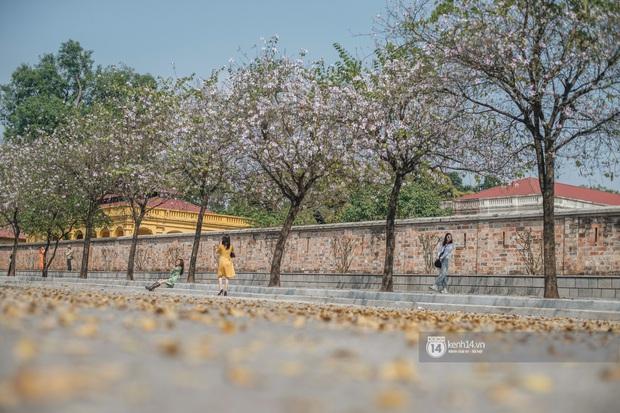Hà Nội đẹp mê mẩn trong sắc tím hoa ban rợp trời, dân tình rần rần rủ nhau về con đường nổi tiếng chụp ảnh - Ảnh 4.