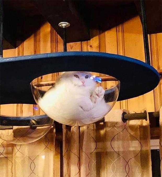 Mèo và bát thủy tinh chính là combo siêu cấp đáng yêu càng xem nhiều càng nghiện - Ảnh 11.