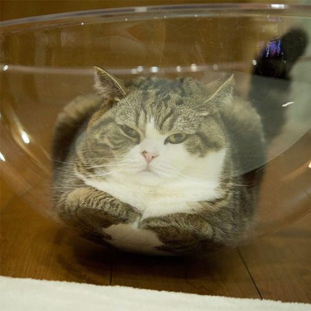 Mèo và bát thủy tinh chính là combo siêu cấp đáng yêu càng xem nhiều càng nghiện - Ảnh 12.