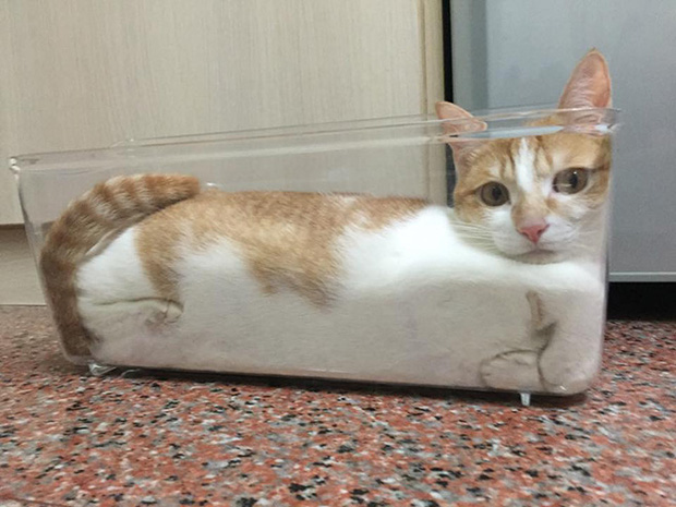 Mèo và bát thủy tinh chính là combo siêu cấp đáng yêu càng xem nhiều càng nghiện - Ảnh 15.