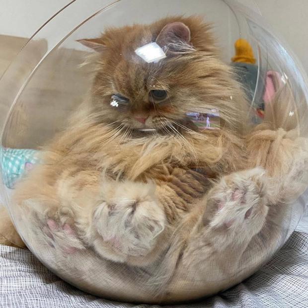 Mèo và bát thủy tinh chính là combo siêu cấp đáng yêu càng xem nhiều càng nghiện - Ảnh 21.