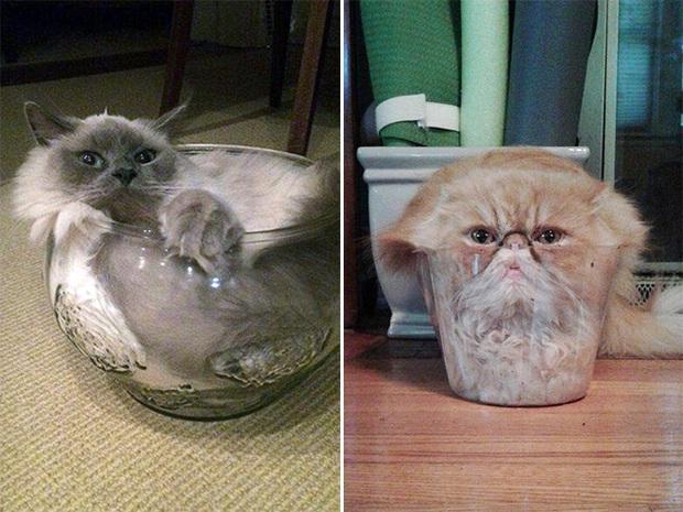 Mèo và bát thủy tinh chính là combo siêu cấp đáng yêu càng xem nhiều càng nghiện - Ảnh 3.