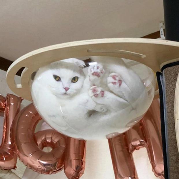 Mèo và bát thủy tinh chính là combo siêu cấp đáng yêu càng xem nhiều càng nghiện - Ảnh 4.