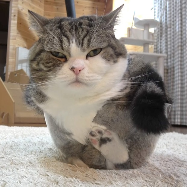 Mèo và bát thủy tinh chính là combo siêu cấp đáng yêu càng xem nhiều càng nghiện - Ảnh 7.