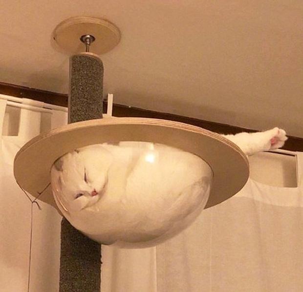 Mèo và bát thủy tinh chính là combo siêu cấp đáng yêu càng xem nhiều càng nghiện - Ảnh 9.