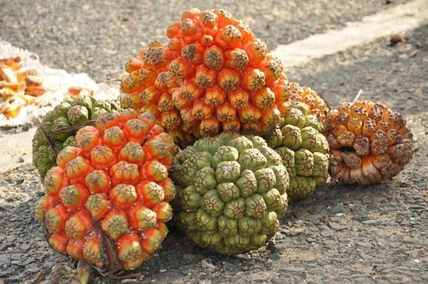 Hiếm người biết Việt Nam có một loại quả mọc dại ăn rất thơm ngọt, xem clip mà dân mạng chẳng ai đoán được tên - Ảnh 4.
