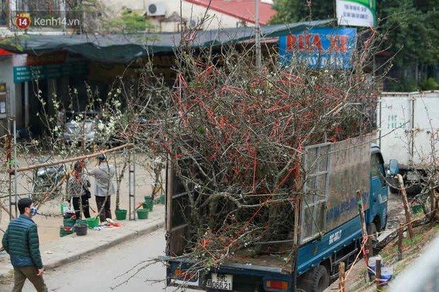 Người Hà Nội rộ mốt chơi hoa lê tiền triệu sau Tết, chuyên gia lên tiếng: Nên cấm việc chặt lê rừng - Ảnh 1.
