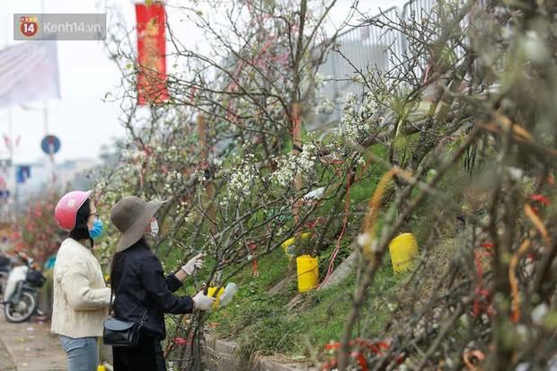Người Hà Nội rộ mốt chơi hoa lê tiền triệu sau Tết, chuyên gia lên tiếng: Nên cấm việc chặt lê rừng - Ảnh 2.
