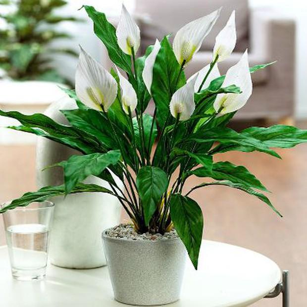 Muốn có tài lộc, may mắn, nhất định phải trồng 8 loại cây này trong nhà - Ảnh 3.