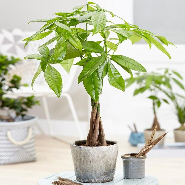 Muốn có tài lộc, may mắn, nhất định phải trồng 8 loại cây này trong nhà - Ảnh 5.