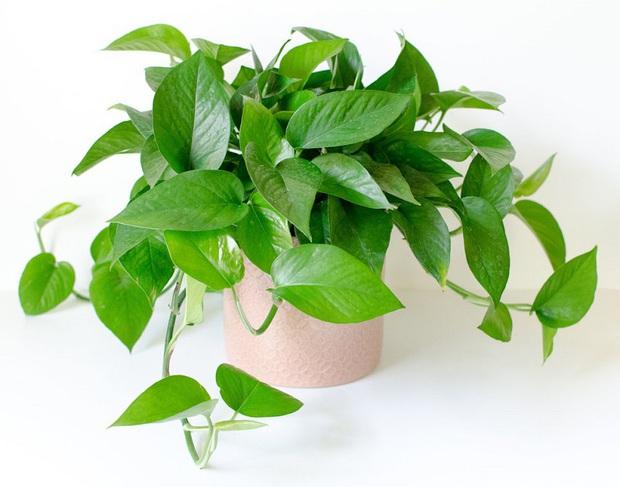 Muốn có tài lộc, may mắn, nhất định phải trồng 8 loại cây này trong nhà - Ảnh 7.