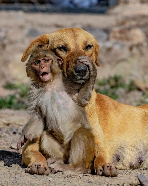 Đang đi đường tình cờ bắt gặp bộ đôi khỉ và chó quấn quýt, nhiếp ảnh gia tìm hiểu càng ngỡ ngàng hơn với mối quan hệ mẹ con lạ đời của chúng - Ảnh 1.