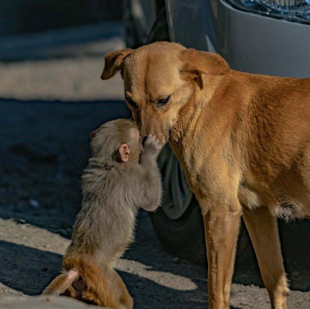Đang đi đường tình cờ bắt gặp bộ đôi khỉ và chó quấn quýt, nhiếp ảnh gia tìm hiểu càng ngỡ ngàng hơn với mối quan hệ mẹ con lạ đời của chúng - Ảnh 2.
