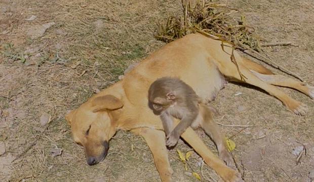 Đang đi đường tình cờ bắt gặp bộ đôi khỉ và chó quấn quýt, nhiếp ảnh gia tìm hiểu càng ngỡ ngàng hơn với mối quan hệ mẹ con lạ đời của chúng - Ảnh 3.